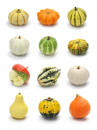 colorful pumpkin and squash collection, halloween background parts