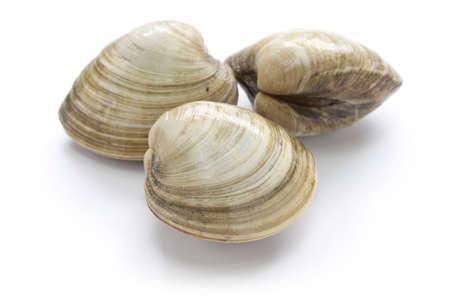 la marinera: almeja dura, almeja aislado en el fondo blanco