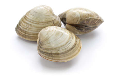hard clam, quahog isolated on white background 免版税图像