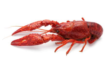 crawfish: crawfish isolated on white background Stock Photo