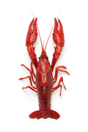 crawfish isolated on white background 写真素材