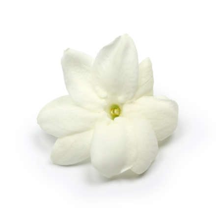 arabian jasmine, jasmine tea flower, close up