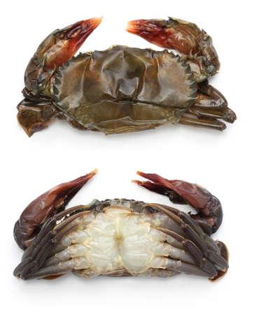 Première crabe à carapace molle, vues avant et arrière, avant la cuisson Banque d'images - 32837068