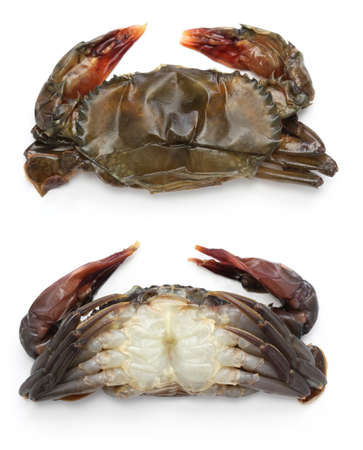 raw soft shell crab, front and back views, before cooking