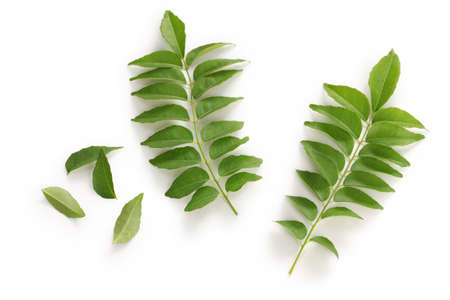 curry: curry leafs