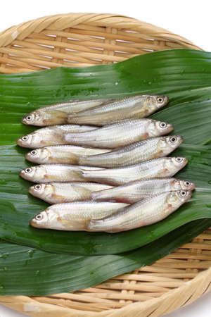 cypriniformes: raw honmoroko, japanese willow gudgeon