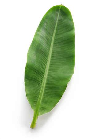 banana leaf: fresh whole banana leaf isolated on white background