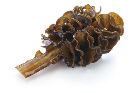 japanese seaweed, mekabu, wakame root isolated on white background