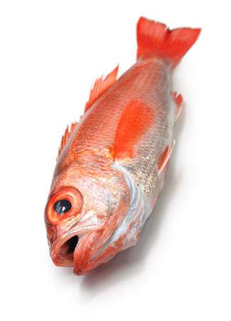 high class: blackthroat seaperch, rosy seabass, nodoguro, akamutsu, japanese high class fish Stock Photo