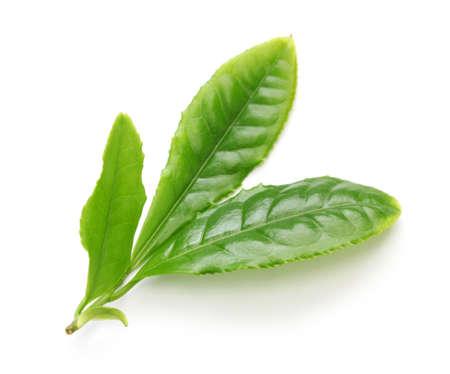blancos: El té verde Japonés primero ras deja aislada sobre fondo blanco Foto de archivo