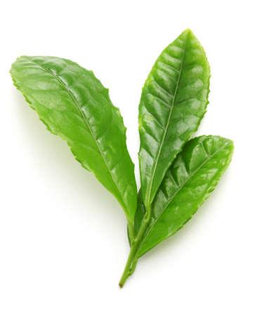 sencha tea: Japanese green tea first flush leaves isolated on white background