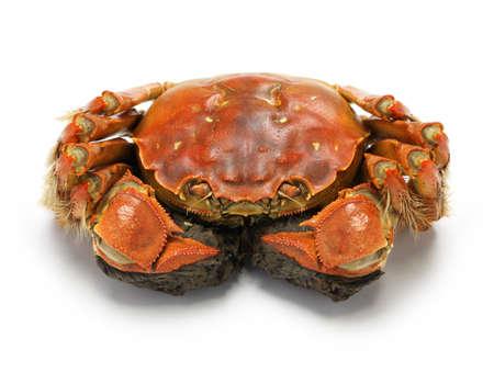 cangrejo: al vapor cangrejo chino, shangai cangrejo peludo aislado en fondo blanco