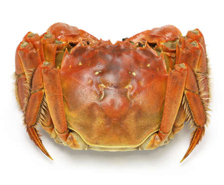 crabs: steamed chinese mitten crab, shanghai hairy crab isolated on white background