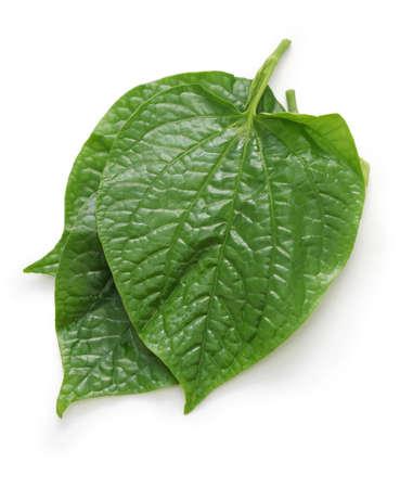 betel: wild betel leaves