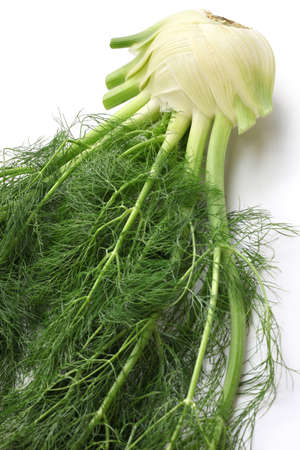 bulb and stem vegetables: fresh finocchio, florence fennel bulb isolated on white background