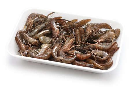 crustacea: Japanese freshwater shrimp, Macrobrachium nipponense
