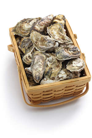 wooden basket: fresh oysters in wooden basket isolated on white background
