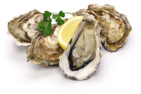 ostra: ostras frescas aisladas sobre fondo blanco Foto de archivo