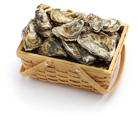 fresh oysters in wooden basket isolated on white background