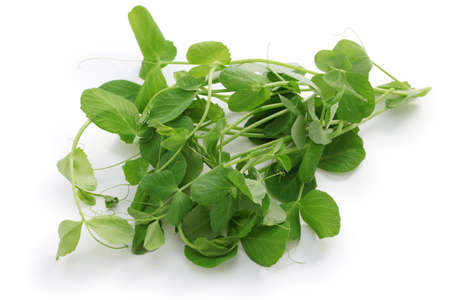 pea shoots, chinese vegetable on white background