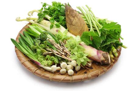 sansai, japanese edible wild plants vegetables 写真素材