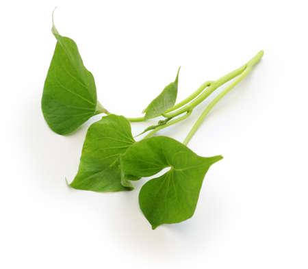 camote: batata hojas sobre fondo blanco Foto de archivo