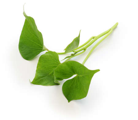 potato leaves: sweet potato leaves on white background