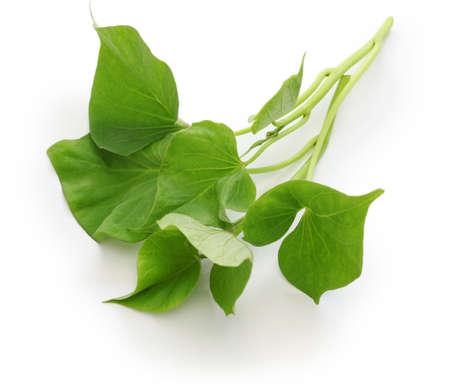 고구마는 흰색 배경에 나뭇잎