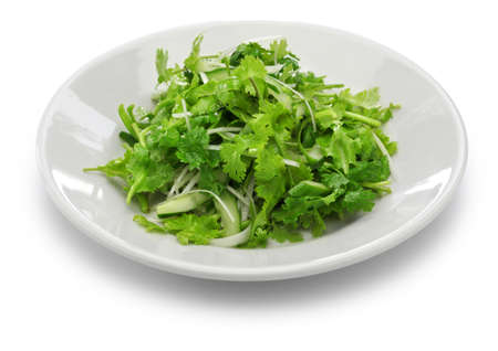 scallion: cilantro salad and coriander salad Stock Photo