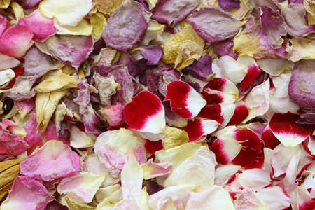 background of homemade dried rose petals