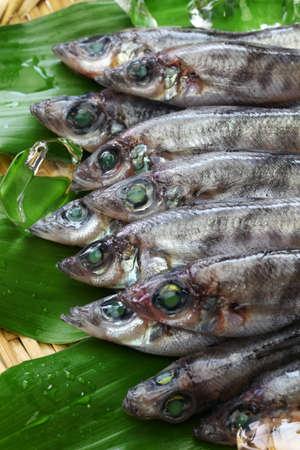 Japanese green eyes fish, Mehiari Stock Photo