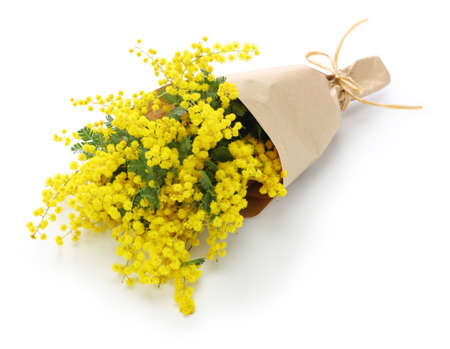 mimosa bouquet isolated on white background Stock Photo