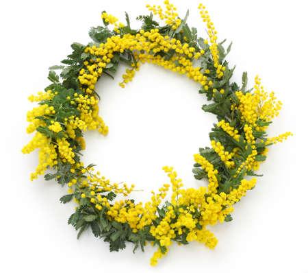 mimosa wreath isolated on white background Stock Photo