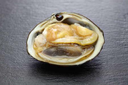 opened the shell of hokkigai (sakhalin surf clam), japanese bivalve