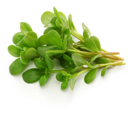 fresh purslane, edible weeds isolated on white background Stock Photo