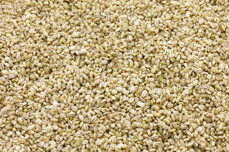 Koji barley, whole grain barley inoculated with spores of Aspergillus Oryzae for making Japanese traditional fermented foo DS