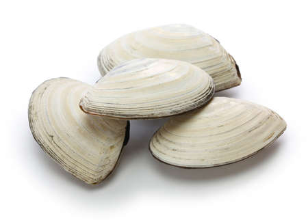 Saragai (northern great tellin clam), japanese seafood isolated on white Фото со стока
