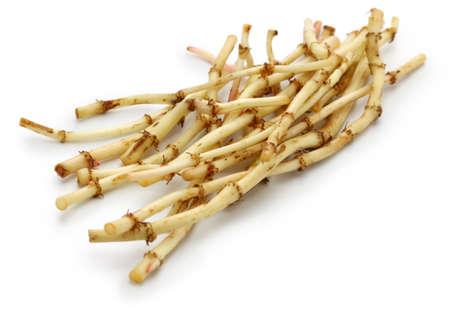 Zheergen, fish mint root, guizhou cuisine ingredient Imagens
