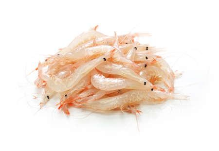 shiroebi, japanese glass shrimp, pasiphaea japonica