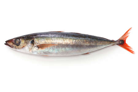 red tail horse mackerel isolated on white background