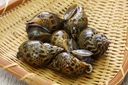 baigai sea snail, japanese babylon on bamboo tray