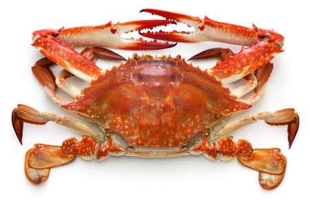 boilded japanese blue crab isolated on white background Stockfoto