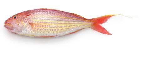 golden threadfin bream isolated on white background