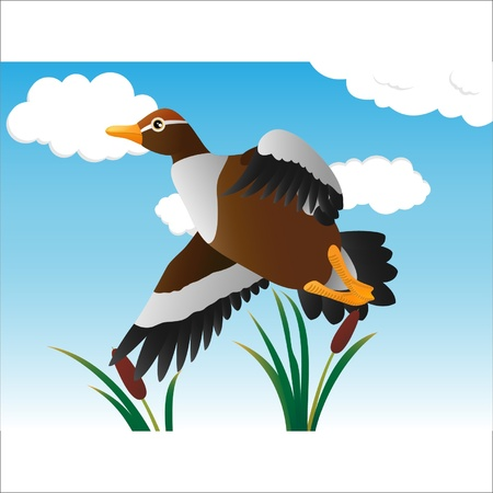 a flying duck in the swamp