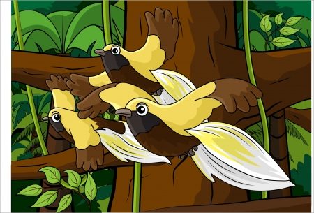 three bird of paradise flying happily in the rain forest Illustration