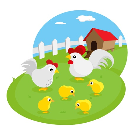 chicken coop: White chicken family in the farm