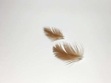 pillows: Checken feather Stock Photo