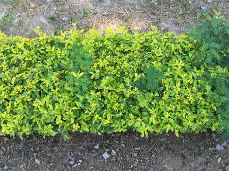 fence: Fence plant