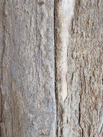 rough: Wood skin Stock Photo