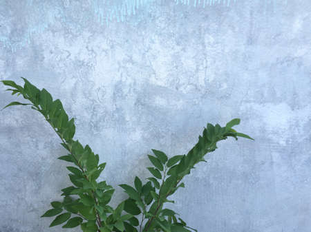 illustration: Plant and wall